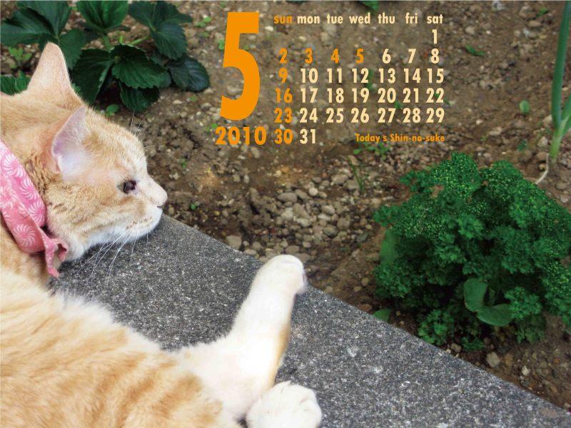 今日の新之介 ~癒し系オヤジ猫~-パセリと