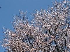 チョ■Qがほしいのか!-山桜