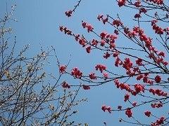 チョ■Qがほしいのか!-紅桜