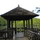 都立石神井公園散策、写真レポート4の記事より