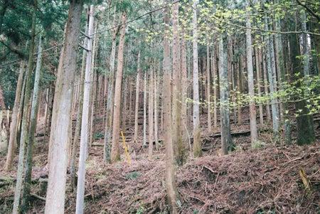 県産材の木の住まい工房のブログ