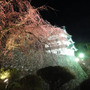 夜桜のライトアップマ…