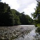都立石神井公園周辺散策、写真レポート6の記事より
