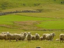 ニュージーランド海外移住永住権nzロングステイ
