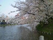 杏の子どもとネコといっしょ。-弘前の桜
