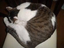 杏の子どもとネコといっしょ。-寝る寝るコスモ