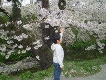 杏の子どもとネコといっしょ。-桜と一緒