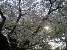 杏の子どもとネコといっしょ。-桜と木漏れ日