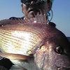 大鯛祭り♪の画像