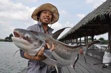 しげるの世界旅行釣行記-チャオプラヤキャットフィッシュ