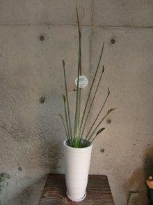 原花店のブログ