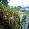 5月のpaysanの画像