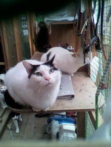 猫トモへの道。-2010051215430000.jpg