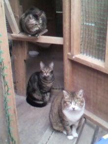 猫トモへの道。-2010051215530002.jpg