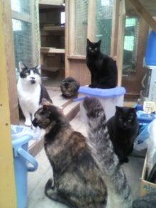 猫トモへの道。-2010051215410000.jpg