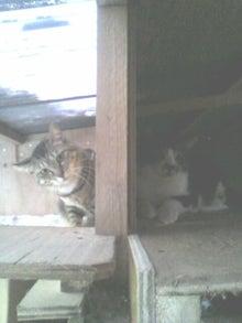 猫トモへの道。-2010051217260000.jpg