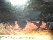 DWARF日記-7cb52b19_c54il6z.jpg
