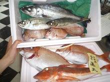 $高橋典子のブログ-魚2