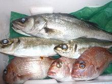 $高橋典子のブログ-魚3