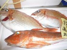 $高橋典子のブログ-魚4
