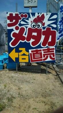 命のメダカ奮闘記-090507_125455.jpg