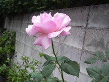 HIKAKIN Official Blog-2010052307460000.jpg