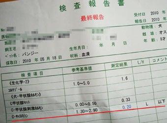 スノボ犬パンジーとあこぷー呑みアル記-検査5