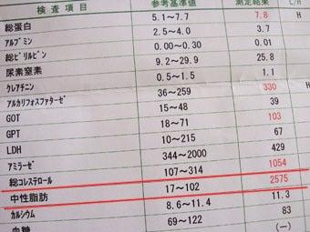 スノボ犬パンジーとあこぷー呑みアル記-検査1