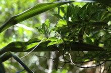 小笠原エコツアー 父島エコツアー         小笠原の旅情報と小笠原の自然を紹介します-シロトベラ