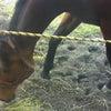 馬が砂浜に!の画像