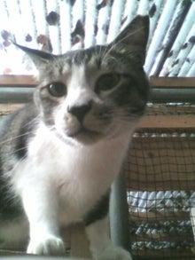 猫トモへの道。-2010052416150002.jpg