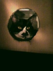 猫トモへの道。-2010052619530002.jpg