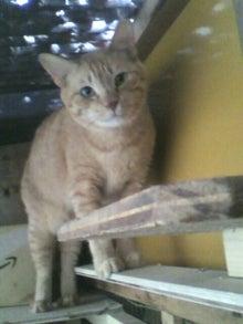 猫トモへの道。-2010052416170000.jpg
