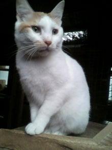 猫トモへの道。-2010052416090001.jpg