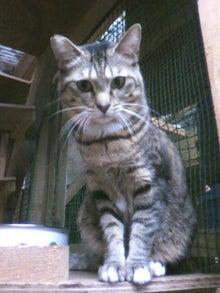 猫トモへの道。-2010052415520001.jpg