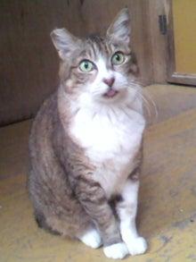 猫トモへの道。-2010052416190000.jpg