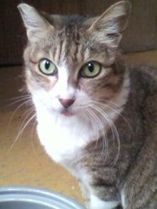 猫トモへの道。-2010052416180001.jpg