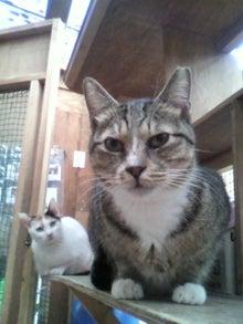 猫トモへの道。-2010052415540000.jpg