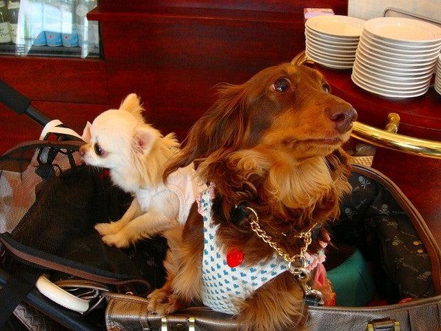 旅犬Lanileaのほほん風船記-まりんちゃん&りりあたん