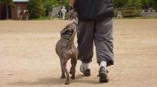ANCHOR DOG SCHOOLのYouTubeチャンネル