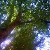 木漏れ日の下で・・・の画像