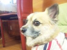 豆太郎徒然日記-100404_1603251.jpg
