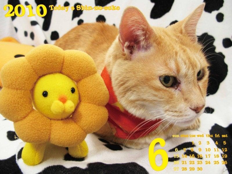 今日の新之介 ~癒し系オヤジ猫~-ガオーン!