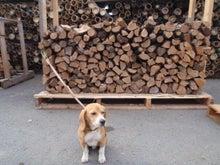 古材流通熊本店のブログ-マッキーと薪