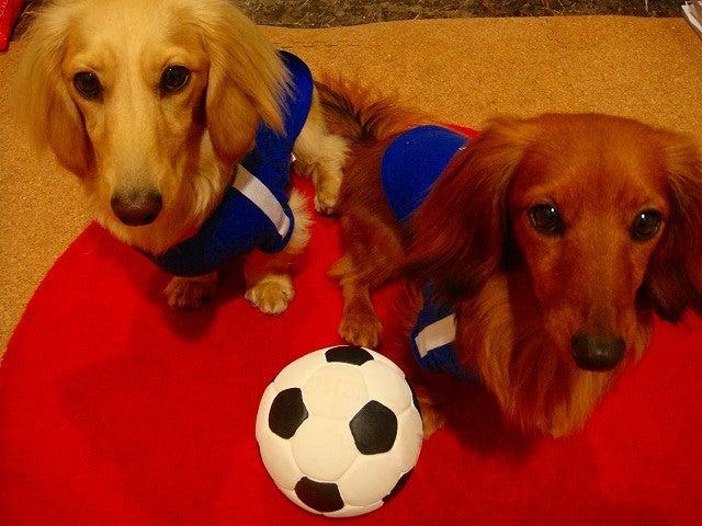 旅犬Lanileaのほほん風船記-サッカー W杯2010