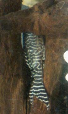 Tamaのたまたま日記-image0146.jpg