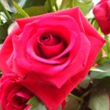薔薇とともに。