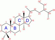 グルコ コルチコイド 受容 体