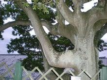 夫婦世界旅行-妻編-直角な木