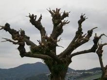 夫婦世界旅行-妻編-うりゃぁぁ!の木